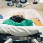 Qu'est-ce qu'un ventilateur? Comment l'appareil respiratoire peut sauver des vies